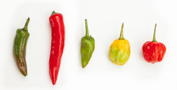 Hot Peppers--Jalapeno, Thai, Serrano, Habanero, Scotch Bonnet