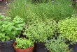A simple container herb garden.