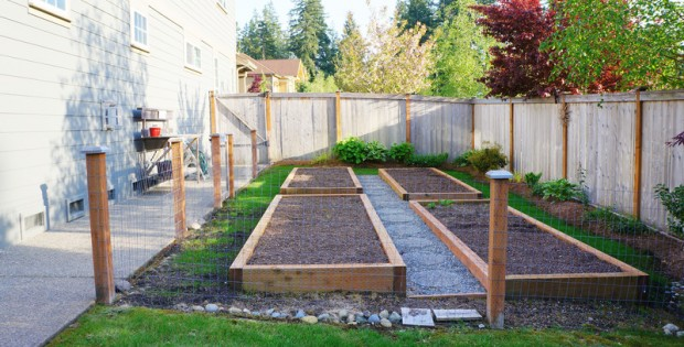 Raised Beds Backyard