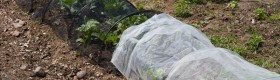 Black shade cloth and white horticultural cloth to shade leafy crops.