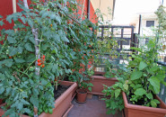 Container garden on balcony